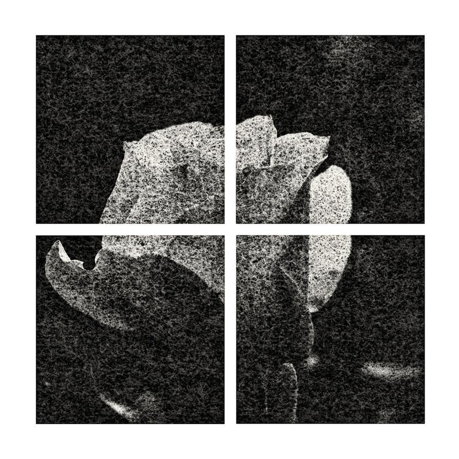 Rose on Washi 02 by HorstSchmier