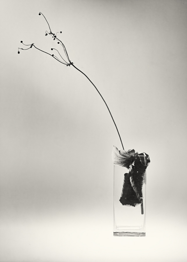 N.T. 01 by HorstSchmier