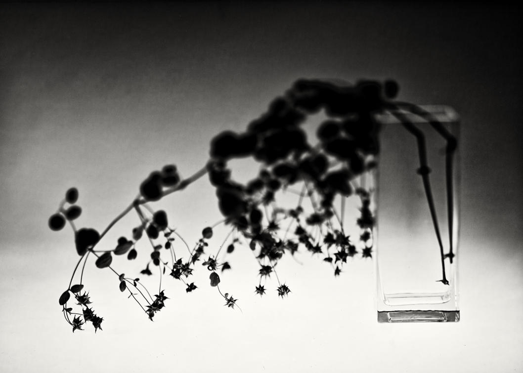 N.T. 03 by HorstSchmier