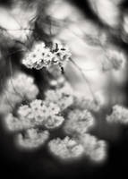 Spring Blossom 02 by HorstSchmier