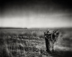 At the Baltic Sea coast - Poel by HorstSchmier
