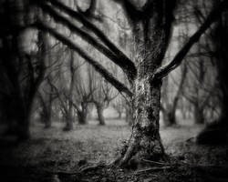 Northern-Hesse, Brother Grimm County 05 by HorstSchmier