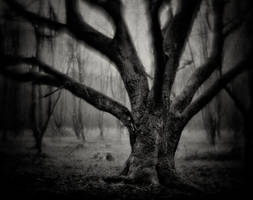 Northern-Hesse, Brother Grimm County 06 by HorstSchmier