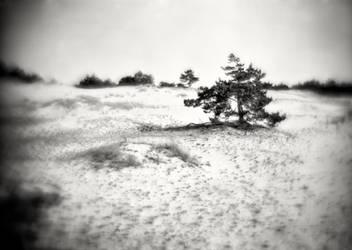 The white dunes of Leba, Poland 01
