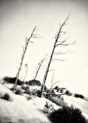 The white dunes of Leba, Poland 02