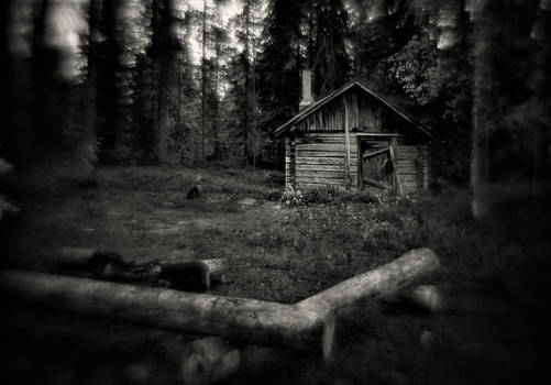 In the Finnish Forest
