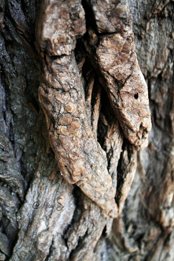 Tree texture by SCHIZOPHRENIC-ALICE