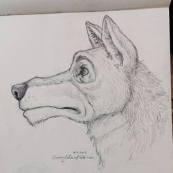 Wolf in Profile by CherryIsland