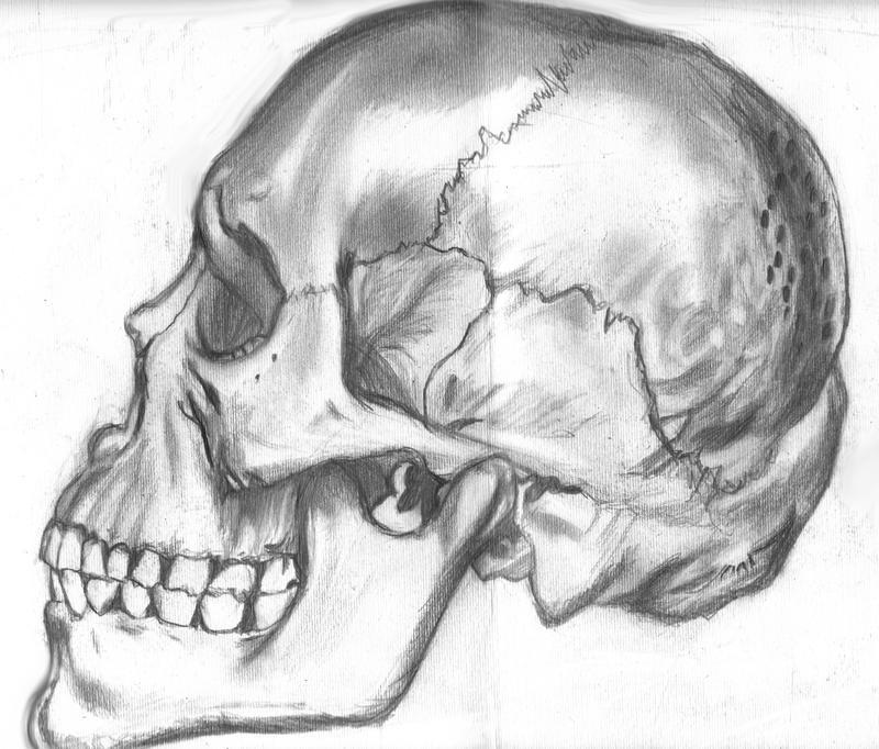 Skull Side. by hydrofaux on DeviantArt