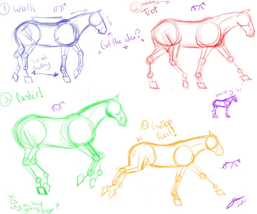 Horse Anatomy Gait sketches by Taint-ed on DeviantArt