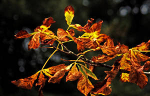 autumn color by awjay