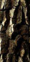 bark 2 by awjay
