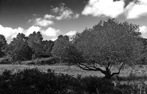 a tree among trees by awjay