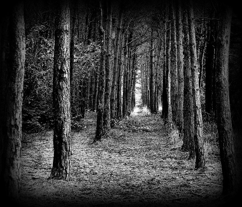 tree line up by awjay