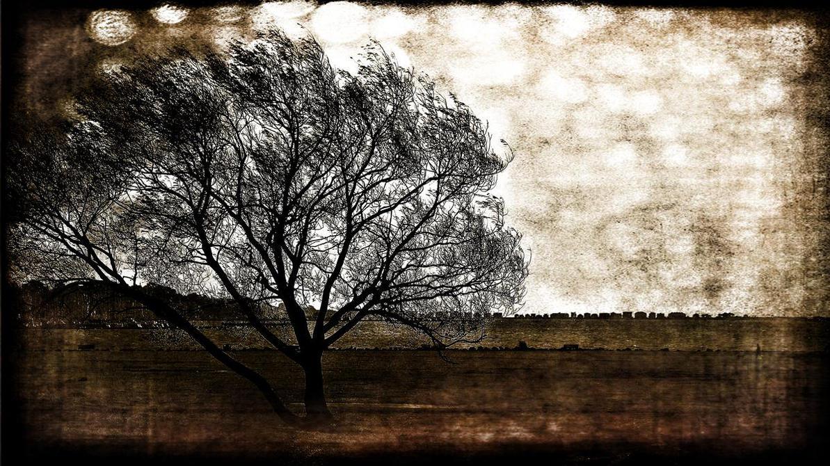 baiter tree by awjay