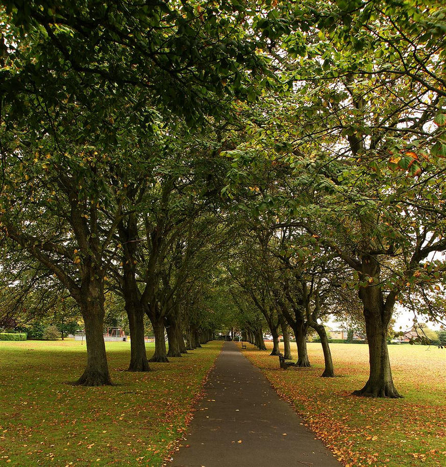 Tree lined path by awjay on deviantart