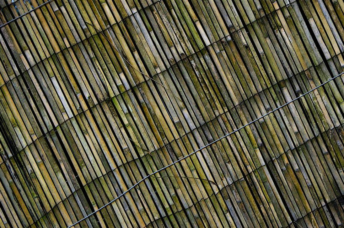 bamboo by awjay