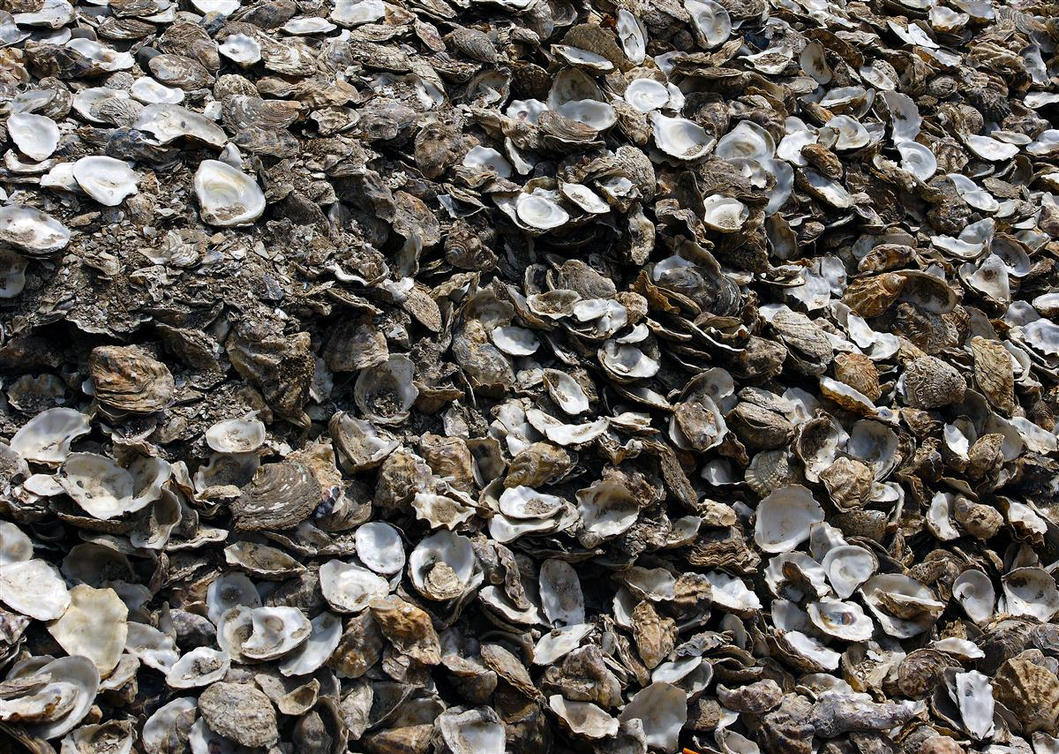 shells by awjay