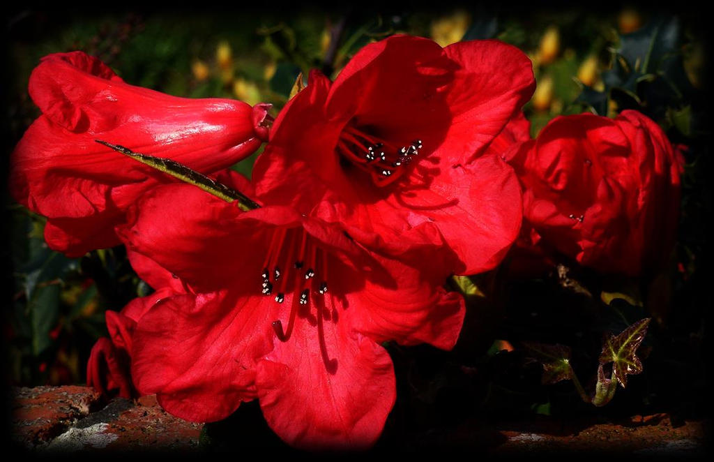 reds by awjay