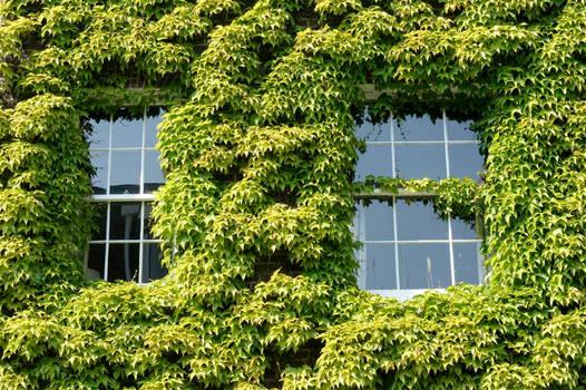 window greens