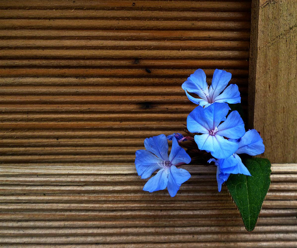 blue intrusion by awjay