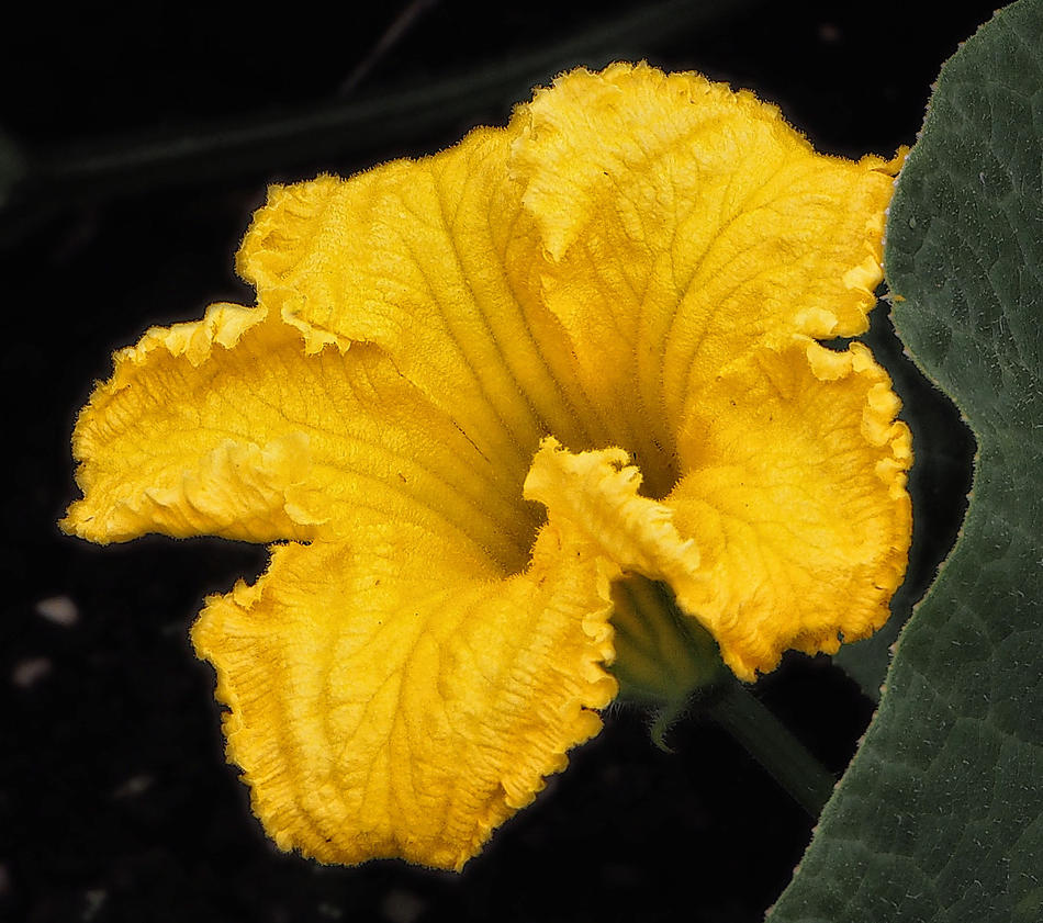open yellow by awjay
