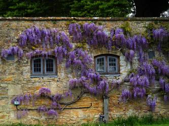 purple... by awjay