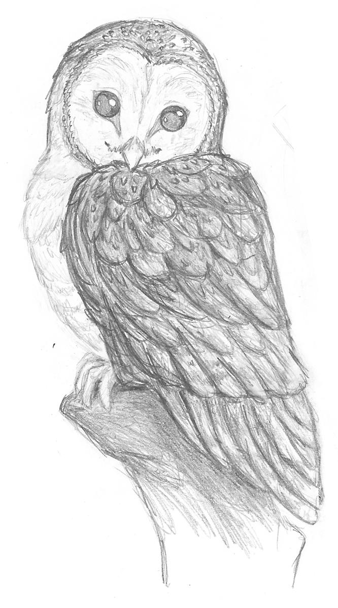 pegasusqueen barn owl pencil by the-snow-fox on DeviantArt