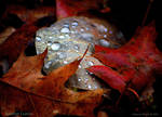 Autumn Leaves by adeb1113