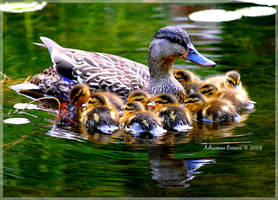 Mother's Love by adeb1113
