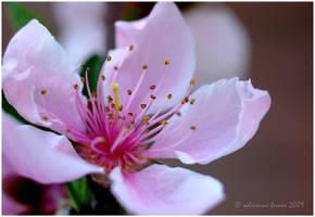 Springtide by adeb1113