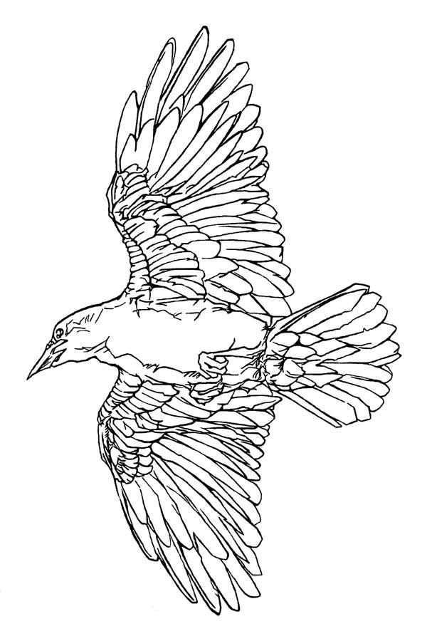 Line Drawing Raven : Raven tattoo line art by smocksinabox on deviantart