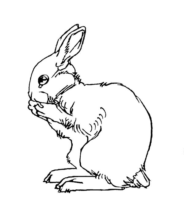 Line Drawing Rabbit : Top bunny face drawing images for pinterest tattoos