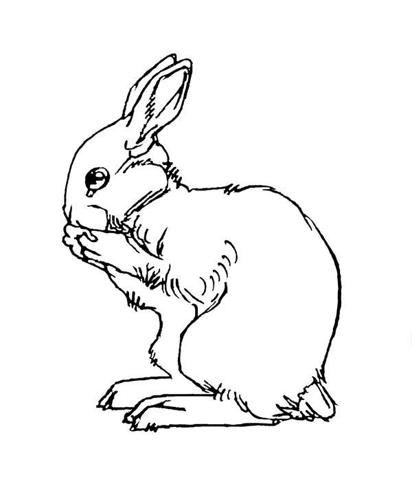 Rabbit Tattoo Art Rabbit Tattoo 2 Line Art by