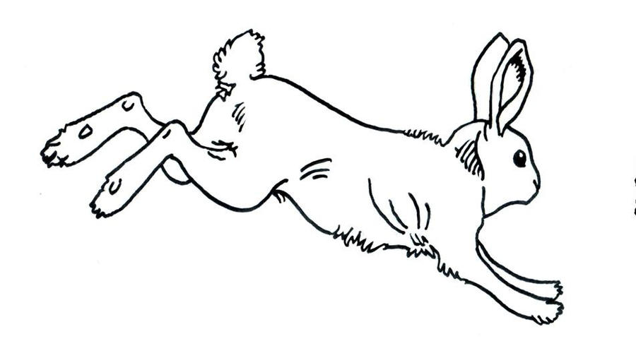 Line Drawing Rabbit : Rabbit line drawing