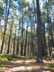 More Trees :3 by starblast9