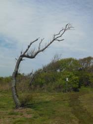 The Wind-Blown Tree by starblast9