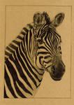 Zebra 5x7in