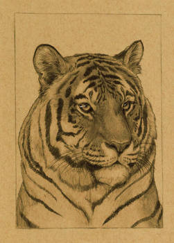 Tiger 5x7in