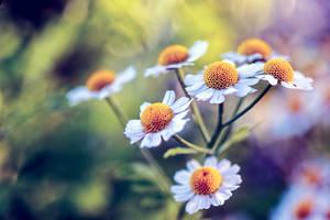 My Sunshine by KristopherWinter