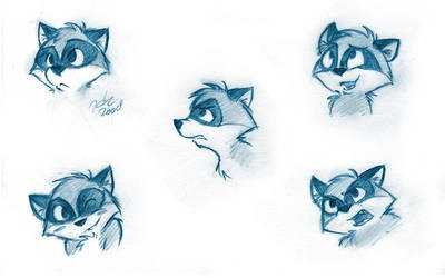 Raccoon Faces