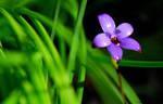 Enamel Orchid 2