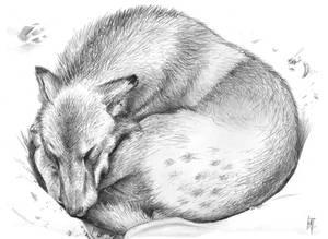 Sleeping Wolf Cub