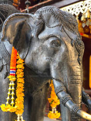 Elephant from Thailand temple