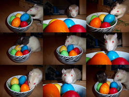 Happy Easter Rats by RatteMacchiato