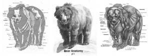Animal Anatomy: Grizzly Bear