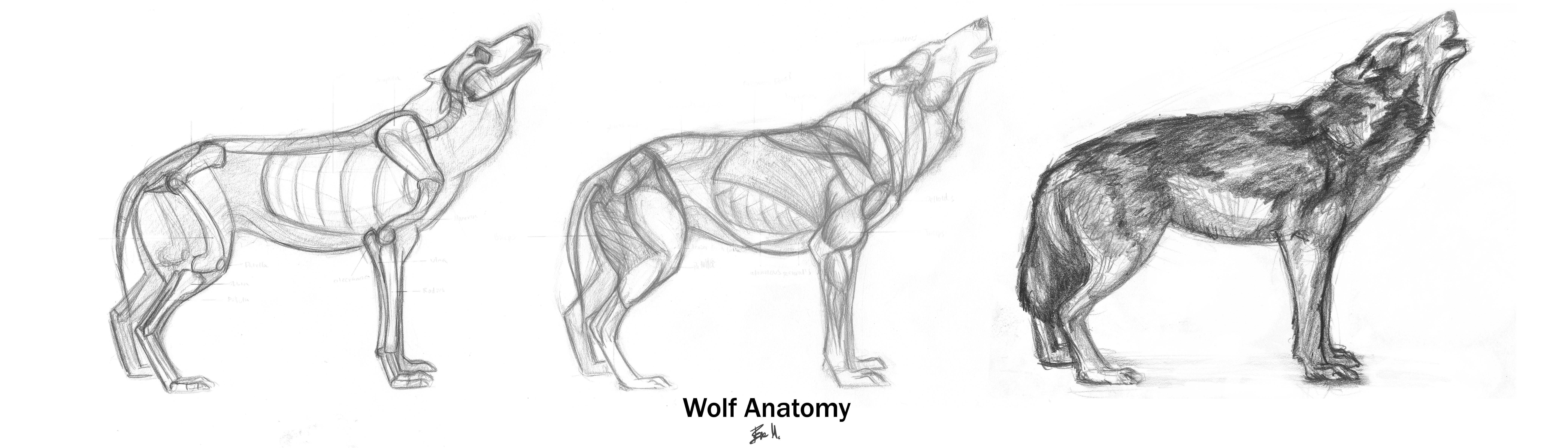 how to draw a werewolf body
