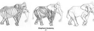 Animal Anatomy: Elephant