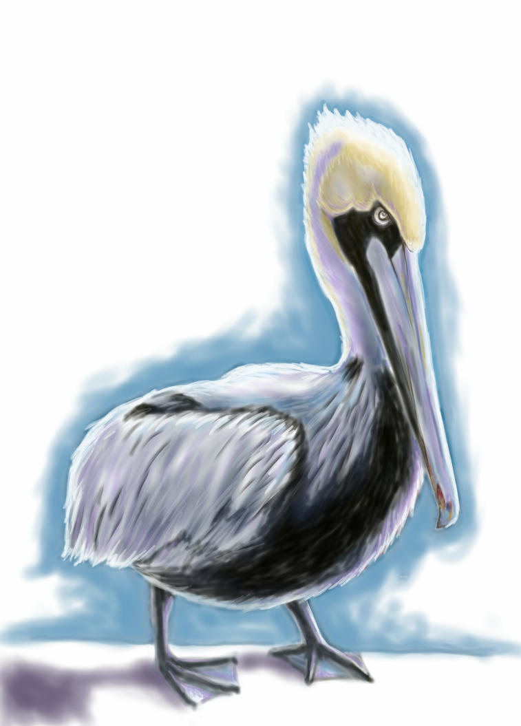 Pelican at rest by AmazingStreetPaint