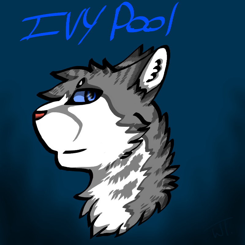 Ivypool by wolftail1999